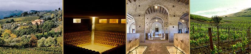 Visite guidate e degustazioni dei nostri vini di pregio